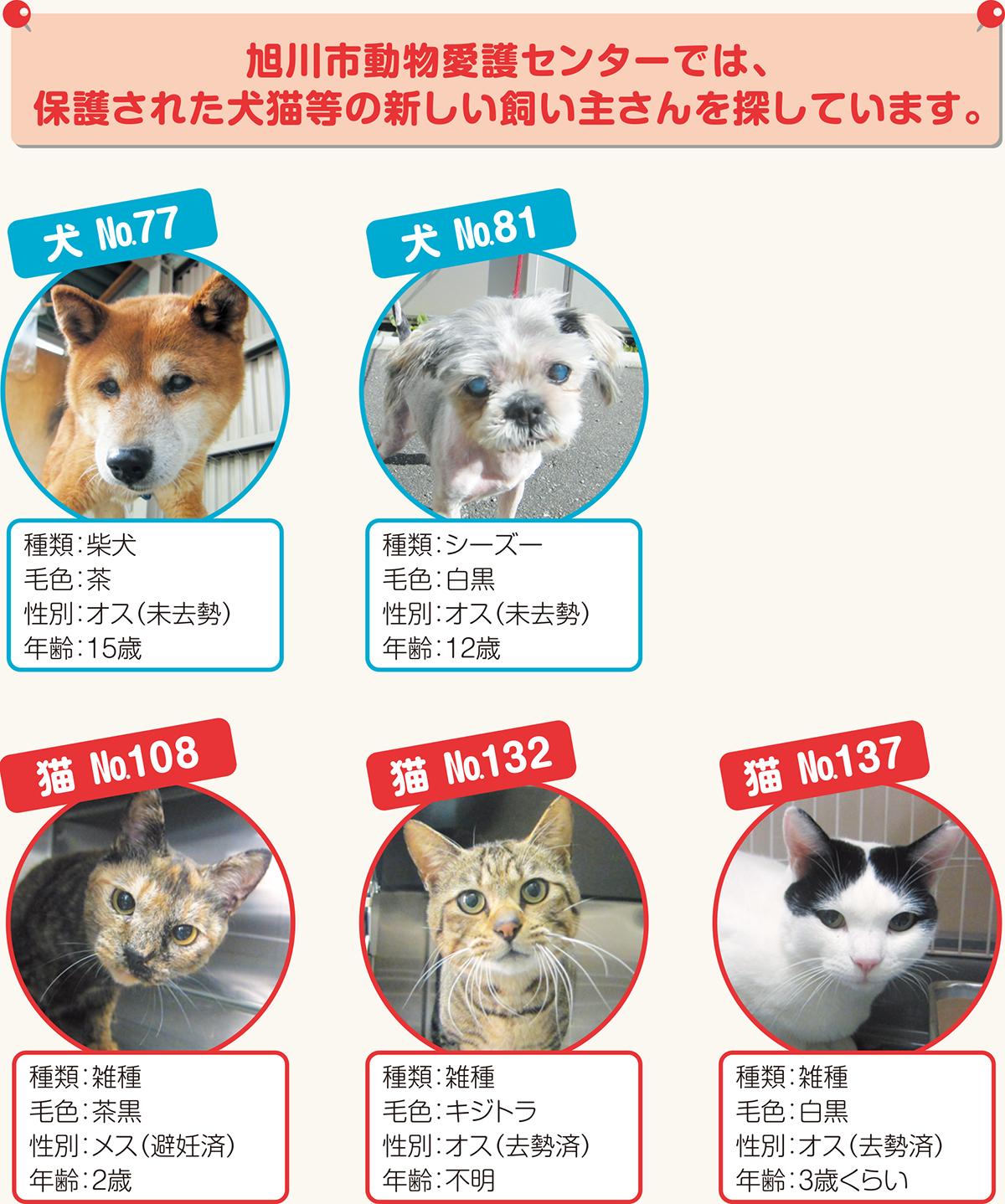 北海道 保護 犬