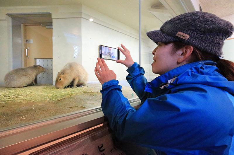 旭山動物園わくわく日記